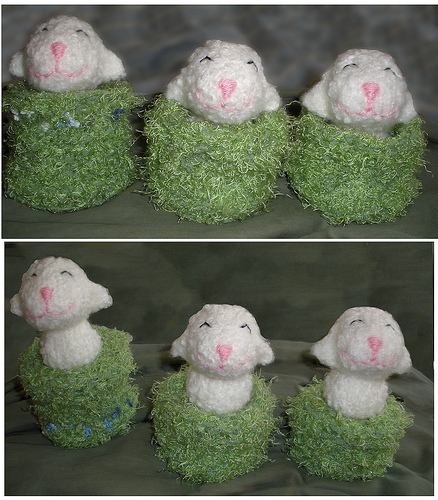 3 little pocket lambies