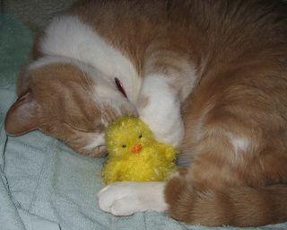 Pudgie Loves Peepsie!